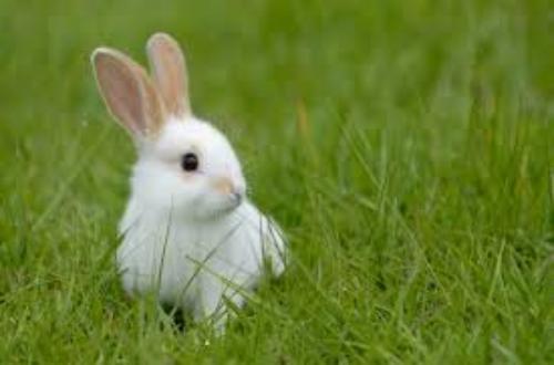 Article : Je cherche un lapin….