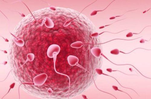 Article : L'infertilité féminine