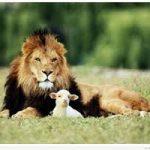Le lion et l'agneau