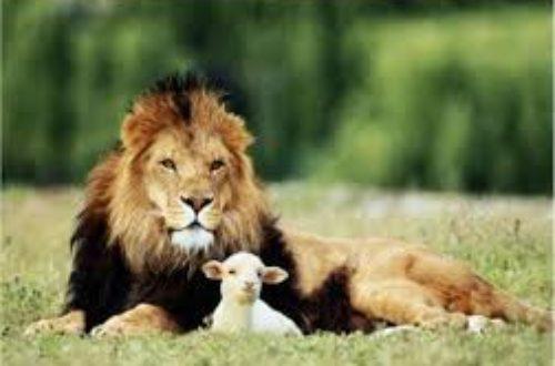 Article : Le lion et l'agneau